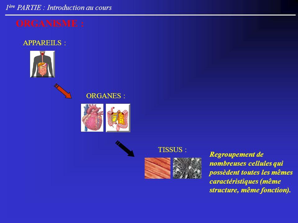 1 ère PARTIE : Introduction au cours TISSUS : Regroupement de nombreuses cellules qui possèdent toutes les mêmes caractéristiques (même structure, même fonction).