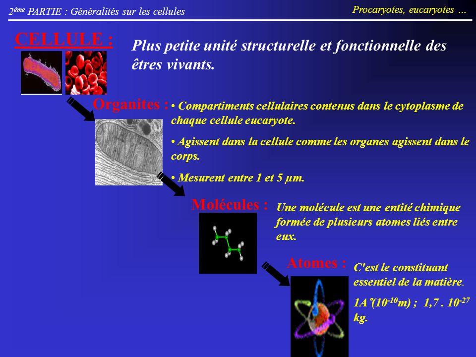 2 ème PARTIE : Généralités sur les cellules Procaryotes, eucaryotes … Organites : CELLULE : Molécules : Une molécule est une entité chimique formée de plusieurs atomes liés entre eux.