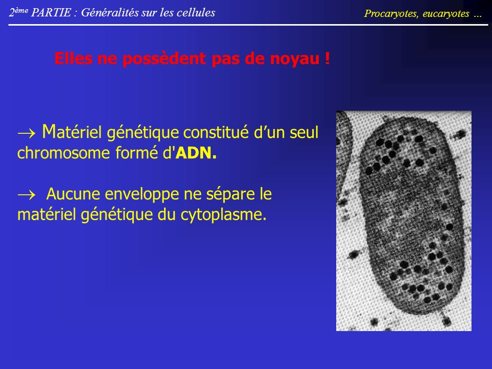 2 ème PARTIE : Généralités sur les cellules Procaryotes, eucaryotes … Elles ne possèdent pas de noyau ! M atériel génétique constitué dun seul chromos