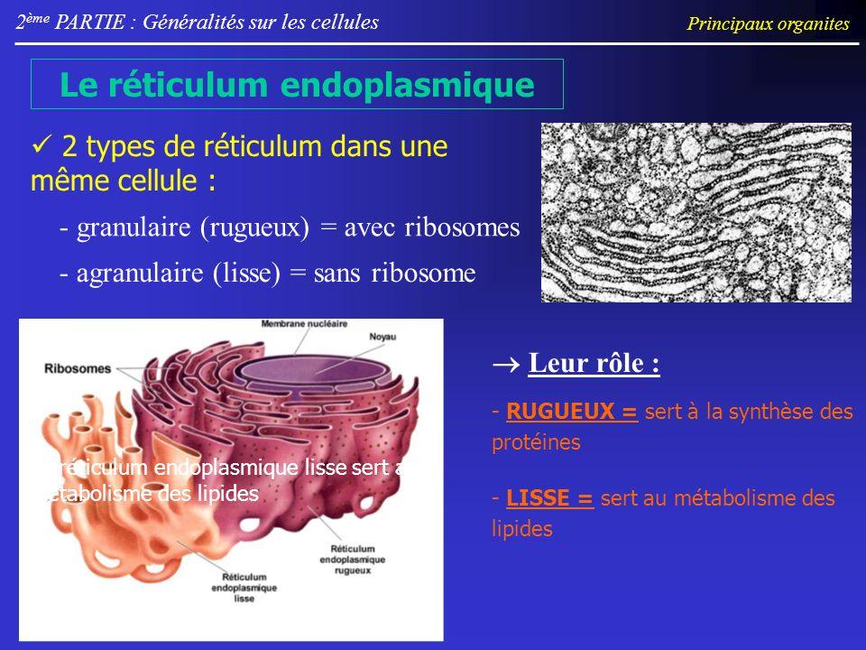 2 ème PARTIE : Généralités sur les cellules Le réticulum endoplasmique 2 types de réticulum dans une même cellule : - granulaire (rugueux) = avec ribo