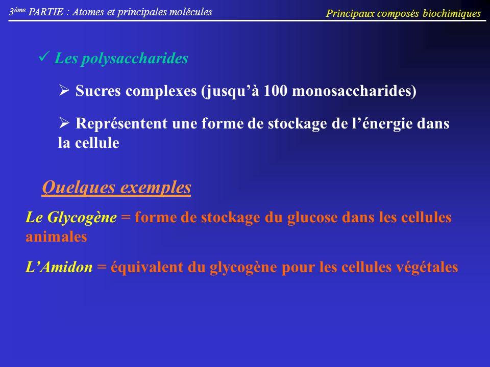 Les polysaccharides 3 ème PARTIE : Atomes et principales molécules Principaux composés biochimiques Sucres complexes (jusquà 100 monosaccharides) Repr