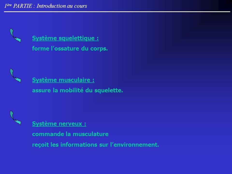 1 ère PARTIE : Introduction au cours Système nerveux : commande la musculature reçoit les informations sur lenvironnement. Système musculaire : assure