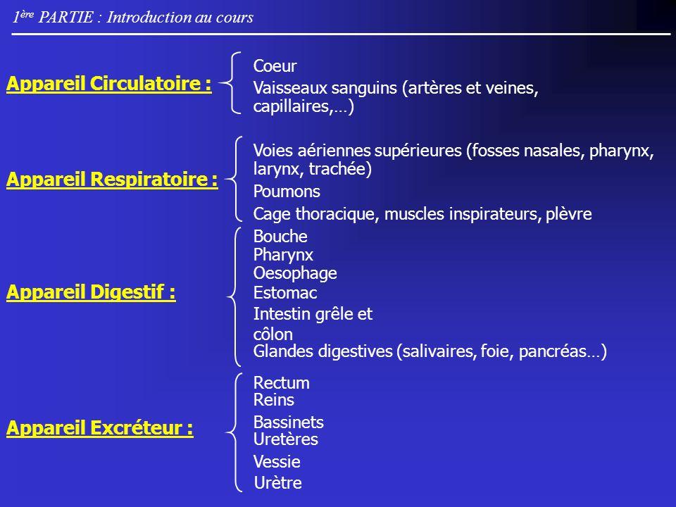 1 ère PARTIE : Introduction au cours Oesophage Estomac Intestin grêle et côlon Glandes digestives (salivaires, foie, pancréas…) Voies aériennes supérieures (fosses nasales, pharynx, larynx, trachée) Poumons Cage thoracique, muscles inspirateurs, plèvre Appareil Circulatoire : Appareil Respiratoire : Appareil Digestif : Appareil Excréteur : Coeur Vaisseaux sanguins (artères et veines, capillaires,…) Bouche Pharynx Rectum Bassinets Uretères Urètre Vessie Reins