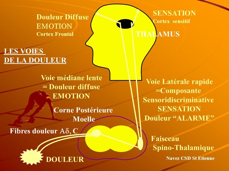 Douleur Diffuse Cortex Frontal SENSATION Cortex sensitif THALAMUS Voie Latérale rapide =Composante Sensoridiscriminative SENSATION Douleur ALARME Voie