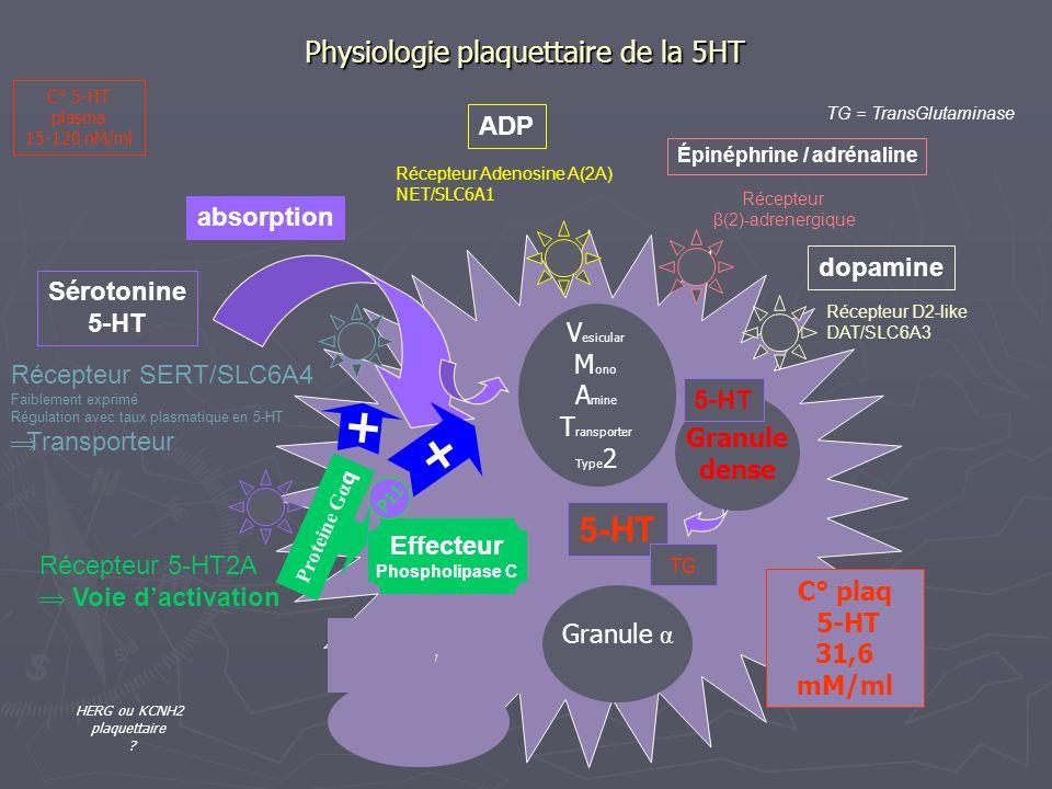 Physiologie plaquettaire de la 5HT Sérotonine 5-HT dopamine Épinéphrine / adrénaline Récepteur D2-like DAT/SLC6A3 ADP TG = TransGlutaminase Effecteur