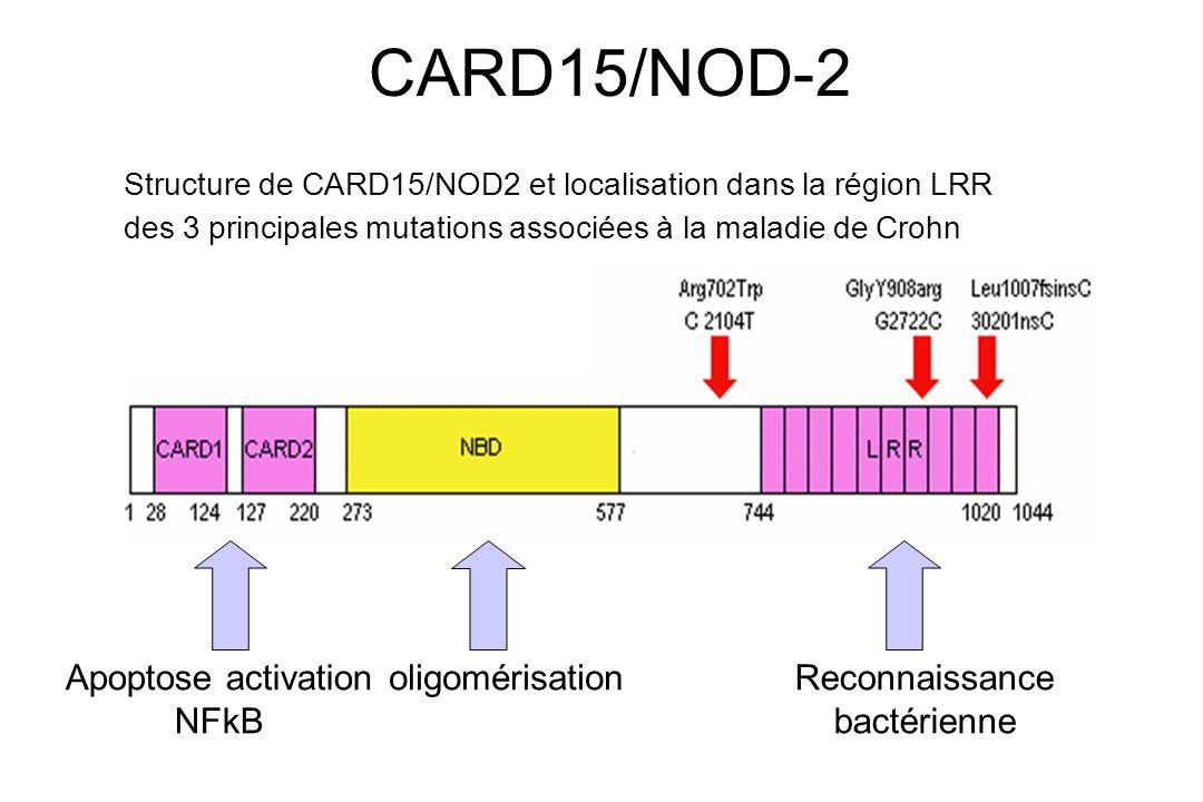CARD15/NOD-2 Structure de CARD15/NOD2 et localisation dans la région LRR des 3 principales mutations associées à la maladie de Crohn Apoptose activati