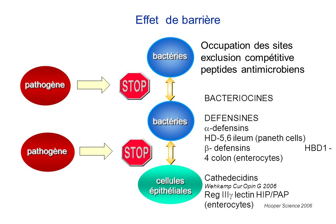 bactériesbactéries Effet de barrière pathogènepathogène cellules épithéliales Occupation des sites exclusion compétitive peptides antimicrobiens bacté