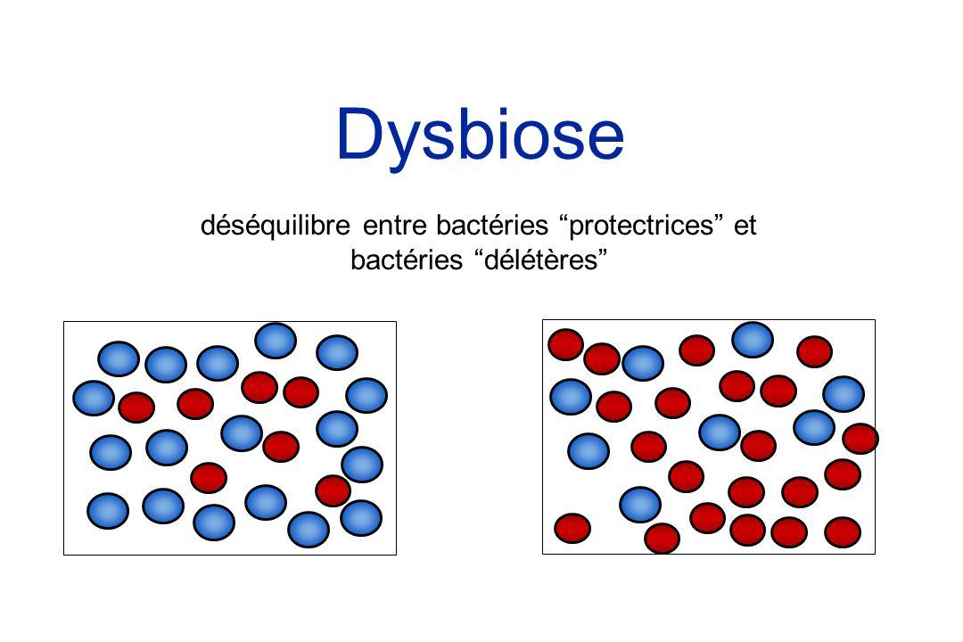 Dysbiose déséquilibre entre bactéries protectrices et bactéries délétères