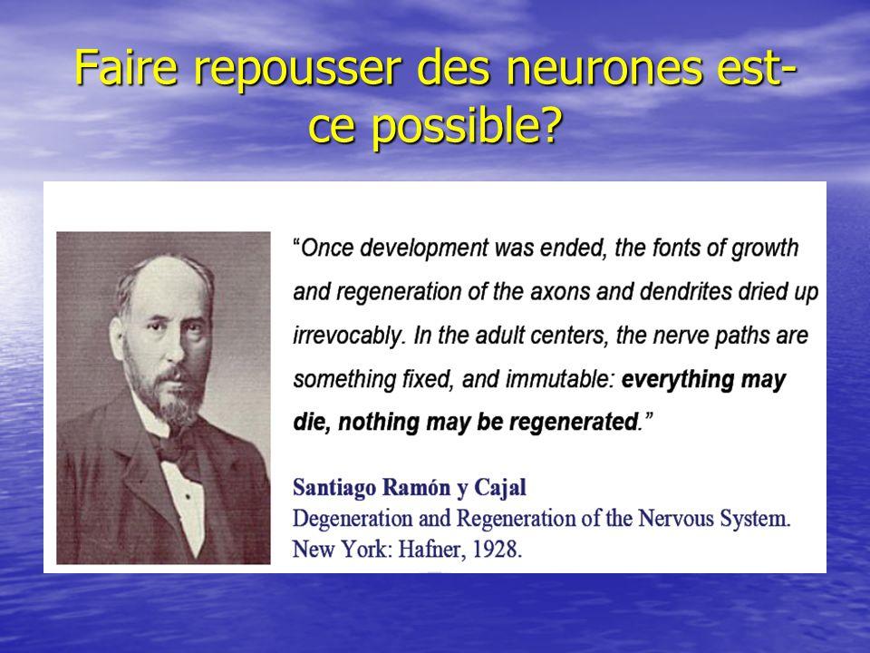 Faire repousser des neurones est- ce possible?