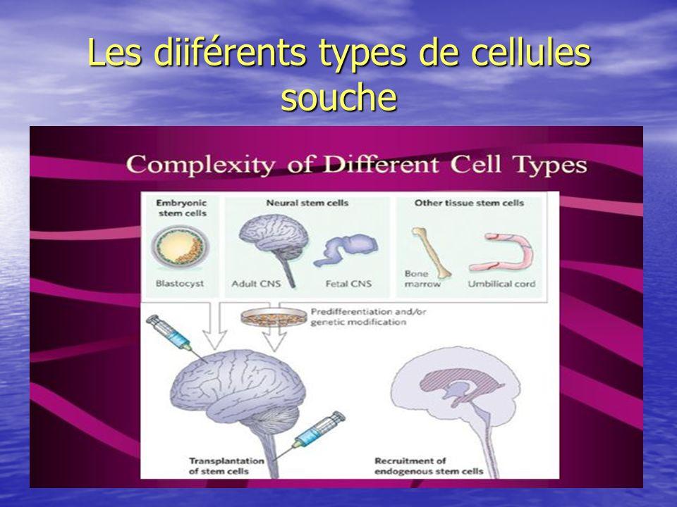Les diiférents types de cellules souche