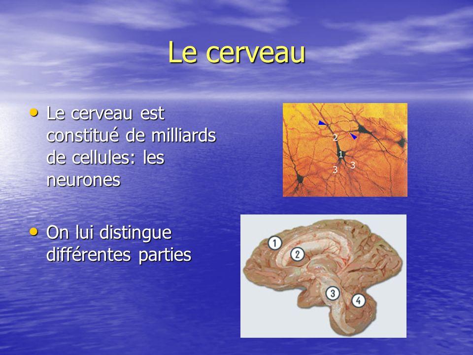 Le cerveau Le cerveau est constitué de milliards de cellules: les neurones Le cerveau est constitué de milliards de cellules: les neurones On lui dist