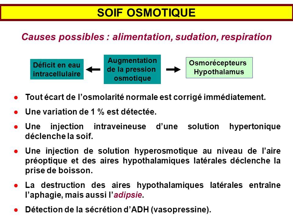SOIF OSMOTIQUE Causes possibles : alimentation, sudation, respiration Osmorécepteurs Hypothalamus Déficit en eau intracellulaire Augmentation de la pr