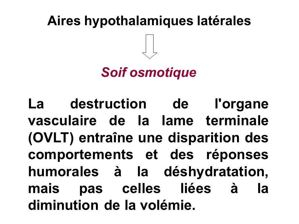 Aires hypothalamiques latérales Soif osmotique La destruction de l'organe vasculaire de la lame terminale (OVLT) entraîne une disparition des comporte