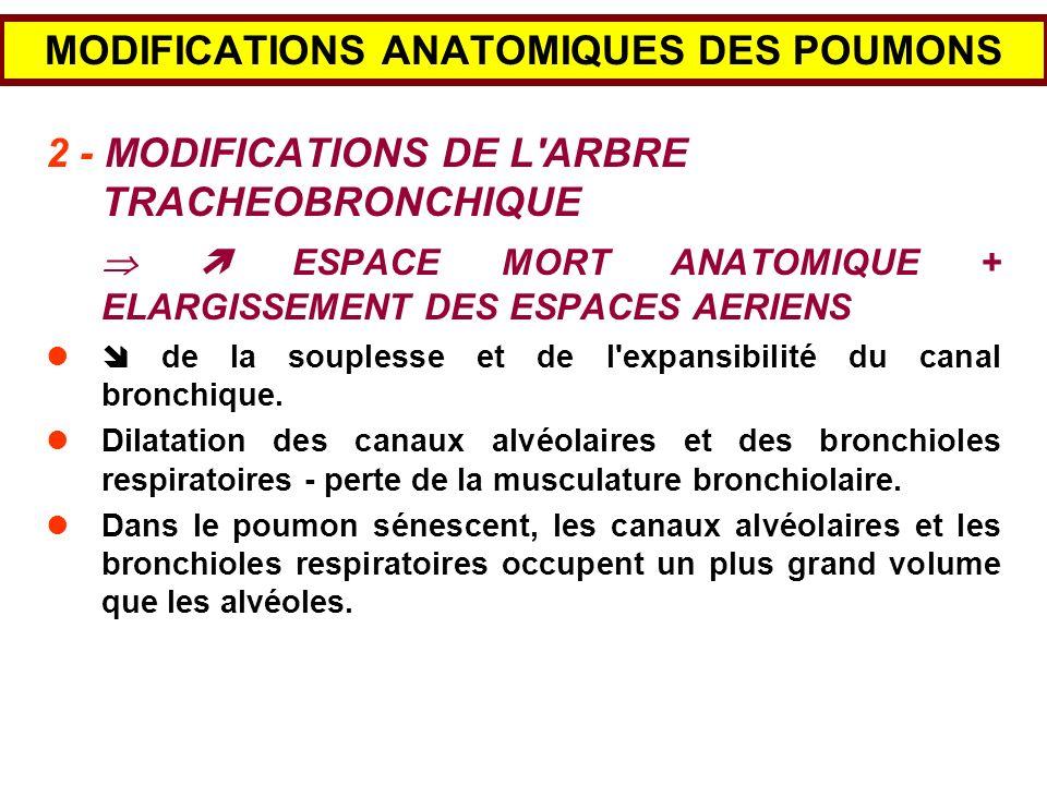 MODIFICATIONS ANATOMIQUES DES POUMONS 3 - MODIFICATIONS DU PARENCHYME PULMONAIRE Diminution de la surface alvéolaire A 30 ans75 m 2 A 70 ans60 m 2 La perte est de 2,7 m 2 par décennie.
