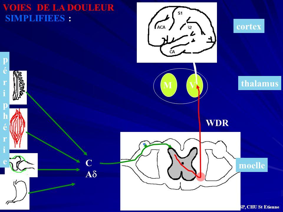 thalamus MV moelle périphérie périphérie cortex C A WDR VOIES DE LA DOULEUR SIMPLIFIEES : G.BILOCQ, UMASP, CHU St Etienne