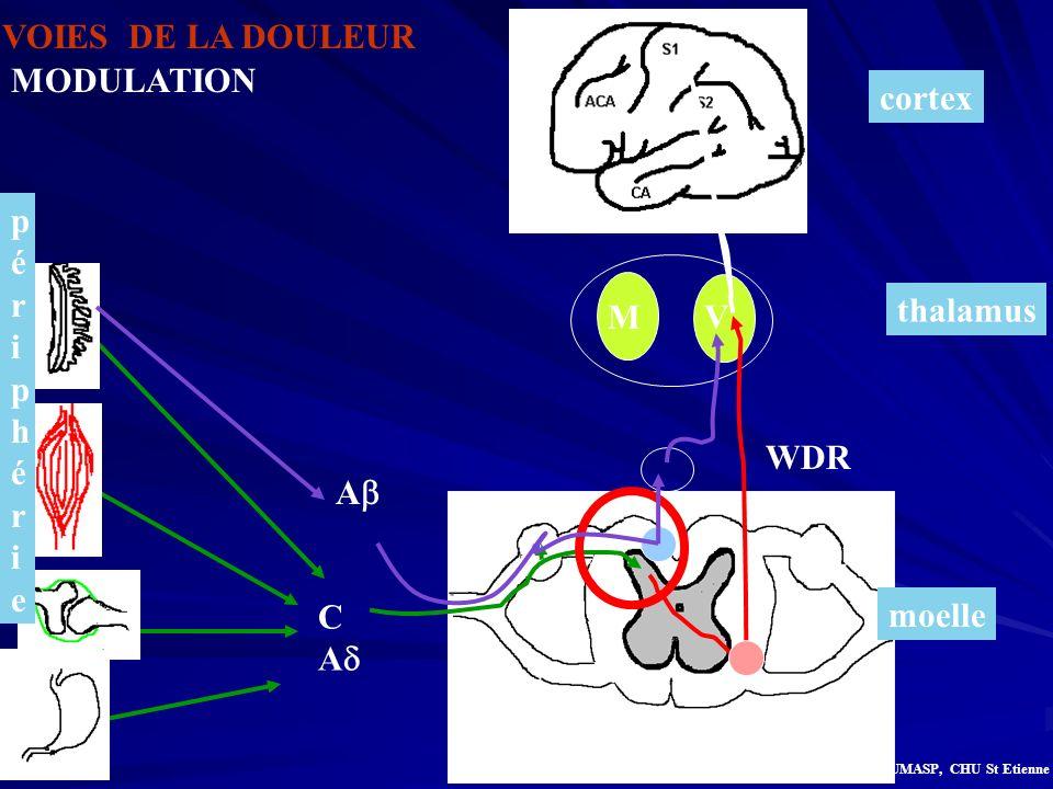 thalamus MV moelle périphérie périphérie VOIES DE LA DOULEUR cortex C A A WDR MODULATION G.Bilocq, UMASP, CHU St Etienne