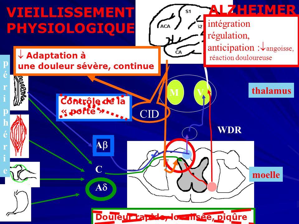 thalamus MV moelle périphérie périphérie cortex A WDR VIEILLISSEMENT PHYSIOLOGIQUE CID Douleur rapide, localisée, piqûre Contrôle de la « porte » Adap