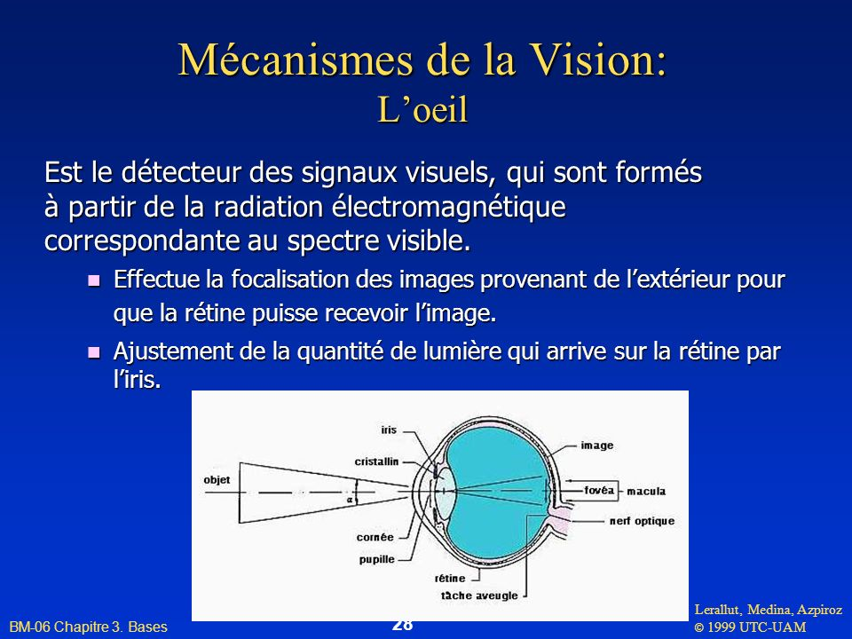 Lerallut, Medina, Azpiroz © 1999 UTC-UAM BM-06 Chapitre 3. Bases 28 Mécanismes de la Vision: Loeil Est le détecteur des signaux visuels, qui sont form