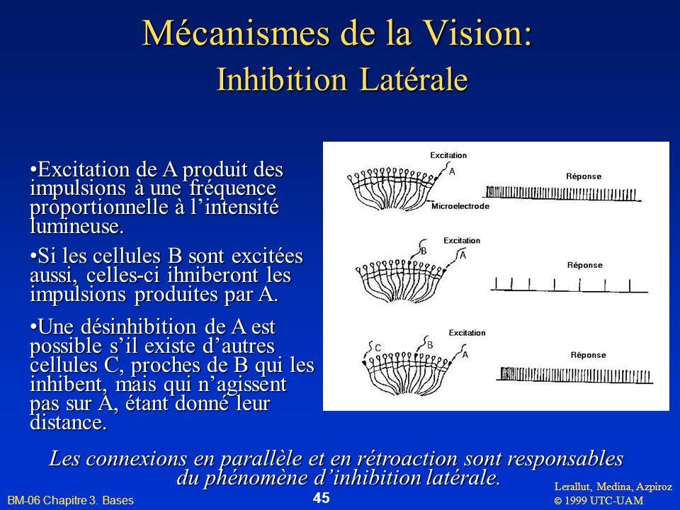 Lerallut, Medina, Azpiroz © 1999 UTC-UAM BM-06 Chapitre 3. Bases 45 Mécanismes de la Vision: Inhibition Latérale Excitation de A produit des impulsion