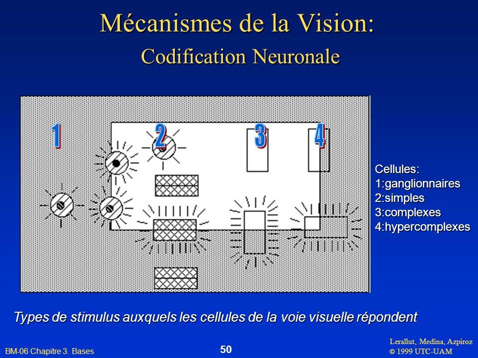 Lerallut, Medina, Azpiroz © 1999 UTC-UAM BM-06 Chapitre 3. Bases 50 Mécanismes de la Vision: Codification Neuronale Cellules:1:ganglionnaires2:simples