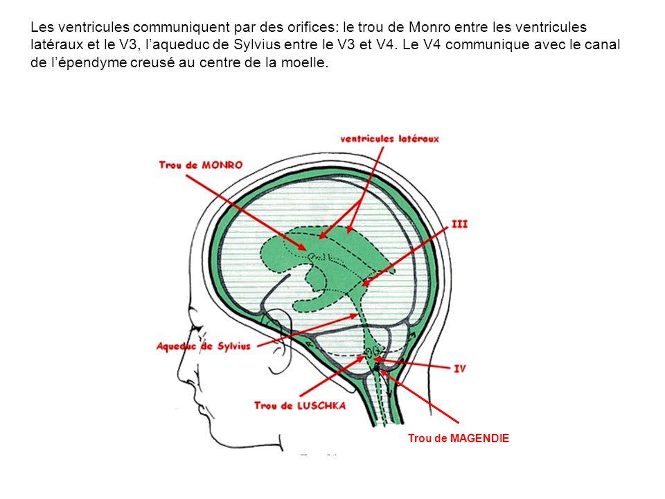Les ventricules communiquent par des orifices: le trou de Monro entre les ventricules latéraux et le V3, laqueduc de Sylvius entre le V3 et V4. Le V4
