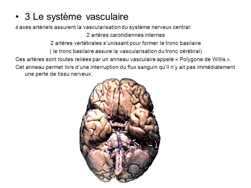 3 Le système vasculaire 4 axes artériels assurent la vascularisation du système nerveux central: 2 artères carotidiennes internes 2 artères vertébrale