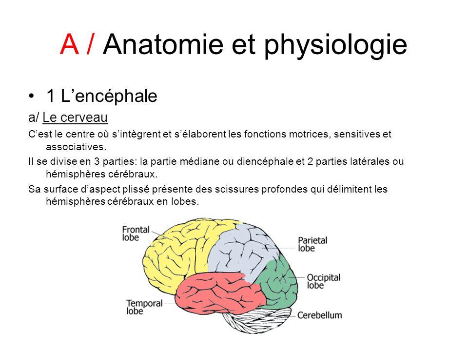 A / Anatomie et physiologie 1 Lencéphale a/ Le cerveau Cest le centre où sintègrent et sélaborent les fonctions motrices, sensitives et associatives.