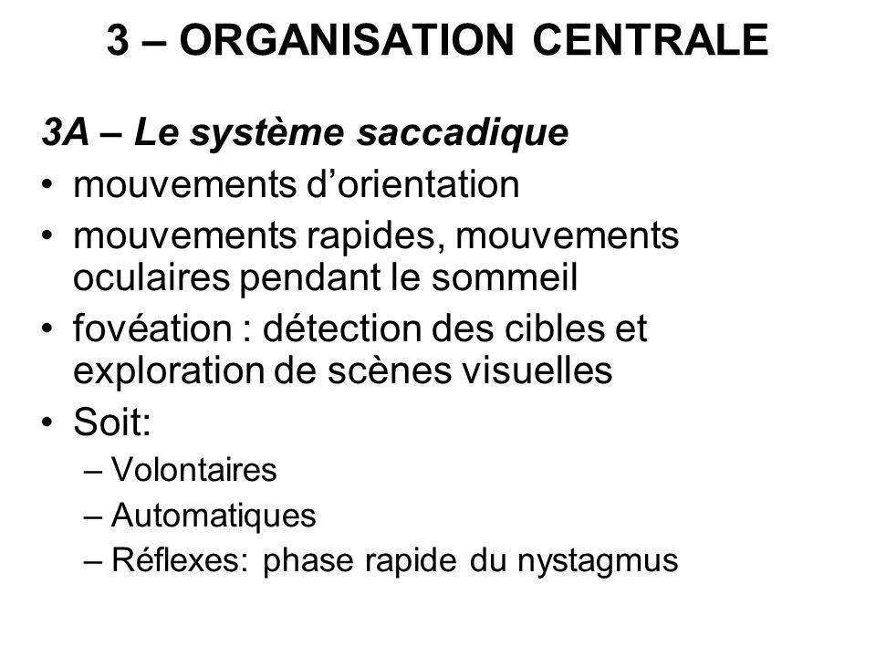 3 – ORGANISATION CENTRALE 3A – Le système saccadique mouvements dorientation mouvements rapides, mouvements oculaires pendant le sommeil fovéation : d