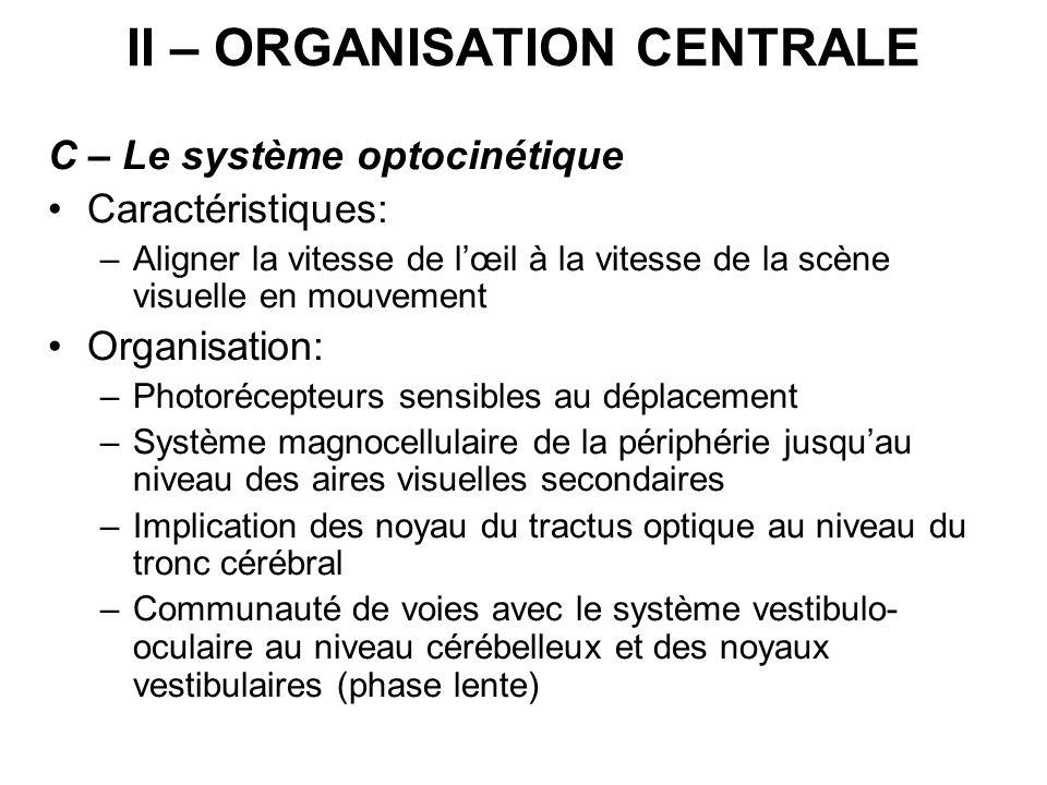 II – ORGANISATION CENTRALE C – Le système optocinétique Caractéristiques: –Aligner la vitesse de lœil à la vitesse de la scène visuelle en mouvement O