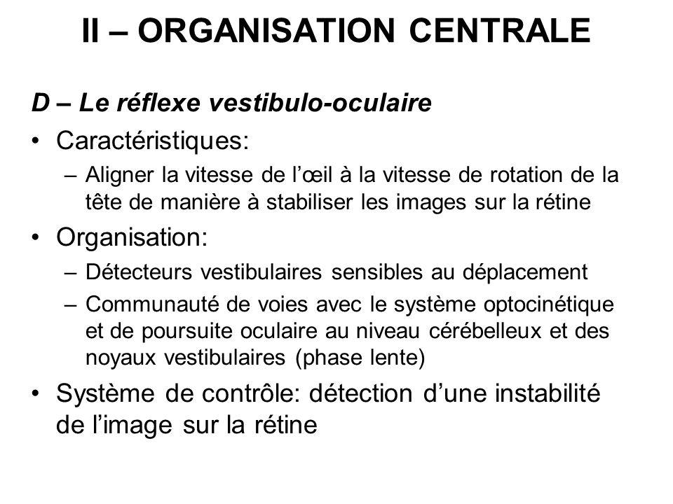 II – ORGANISATION CENTRALE D – Le réflexe vestibulo-oculaire Caractéristiques: –Aligner la vitesse de lœil à la vitesse de rotation de la tête de mani