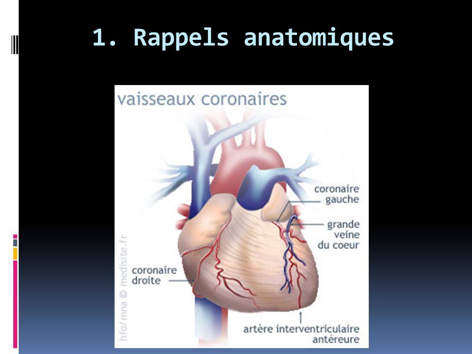 1. Rappels anatomiques