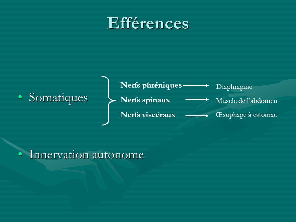 Efférences SomatiquesSomatiques Innervation autonomeInnervation autonome Nerfs phréniques Nerfs spinaux Nerfs viscéraux Diaphragme Muscle de labdomen