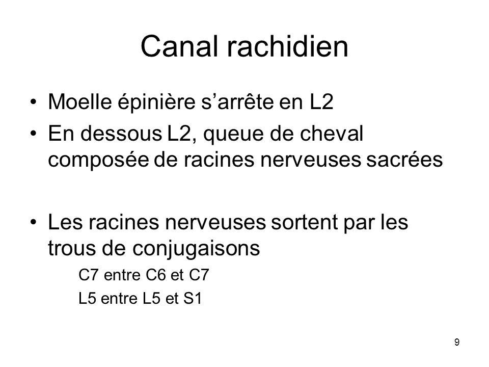 9 Canal rachidien Moelle épinière sarrête en L2 En dessous L2, queue de cheval composée de racines nerveuses sacrées Les racines nerveuses sortent par