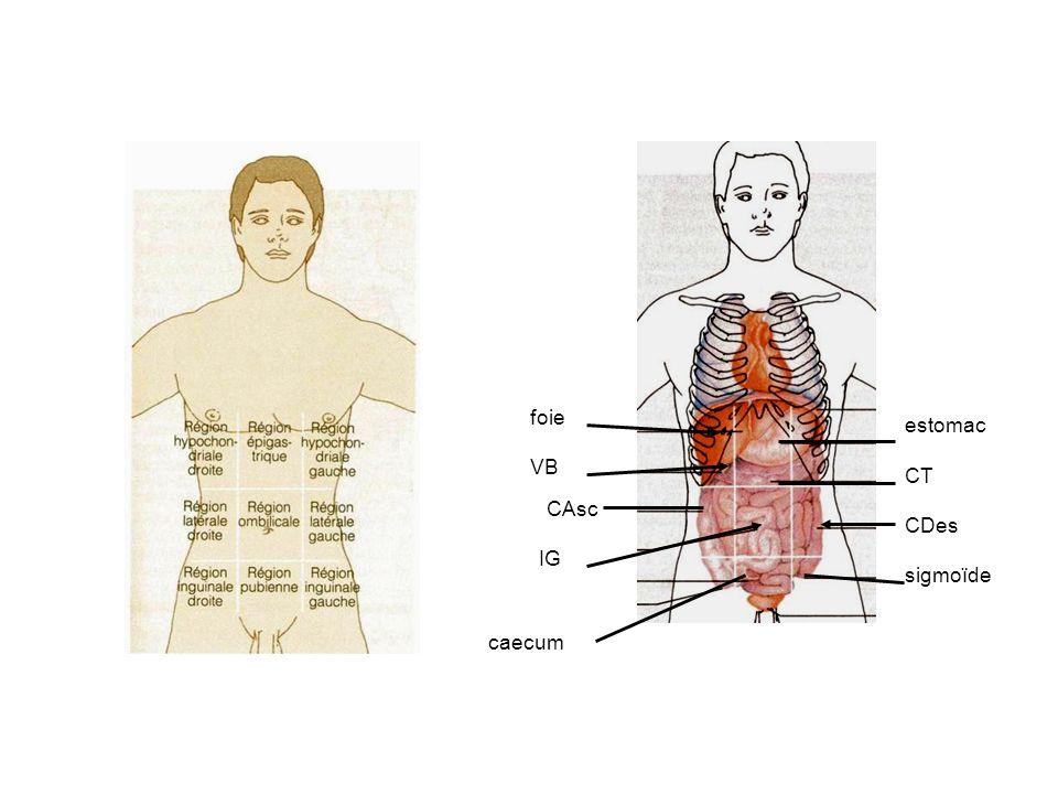foie VB CAsc IG CDes CT estomac caecum sigmoïde