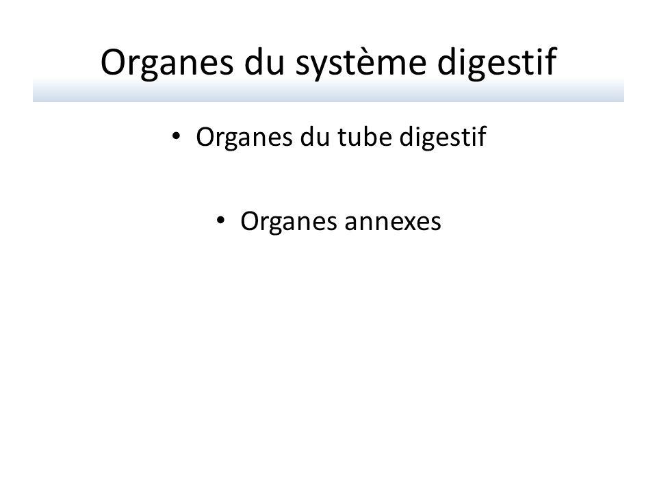 Organes du tube digestif Bouche Pharynx Œsophage Estomac Intestin grêle Colon Anus