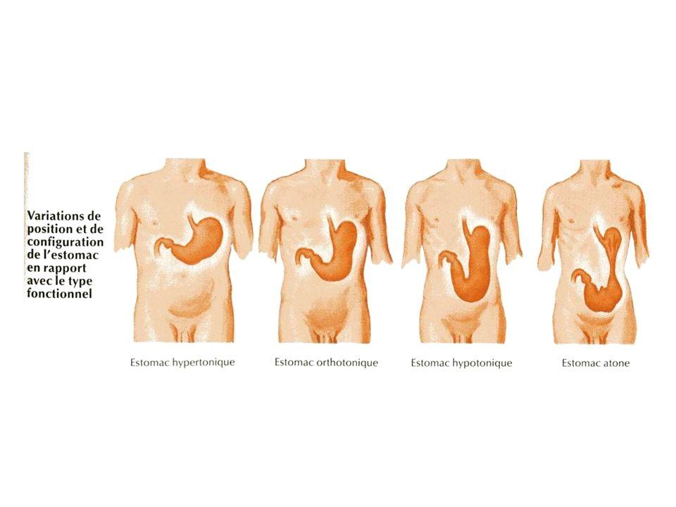 Examens complémentaires 1.Endoscopie digestive 2.Echoendoscopie digestive 3.Examens radiologiques 4.Cholangiopancréatographie rétrograde (CPRE) 5.Explorations fonctionnelles de la motricité digestive 6.Explorations fonctionnelles de la sécrétion gastrique 7.Explorations isotopiques 8.Test respiratoire au glucose 9.PBH 10.Coproculture