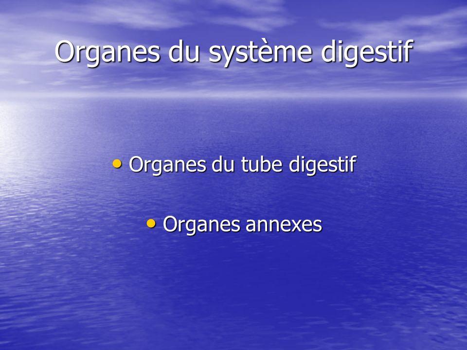 Organes du tube digestif Bouche Bouche Pharynx Pharynx Œsophage Œsophage Estomac Estomac Intestin grêle Intestin grêle Colon Colon Anus Anus