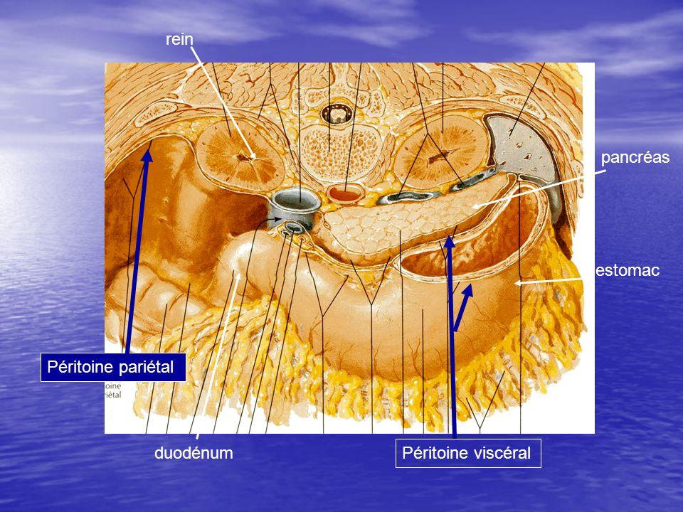 TOGDLavement baryté Hernie diaphragmatique Hernie intra thoracique de langle colique droit et transverse