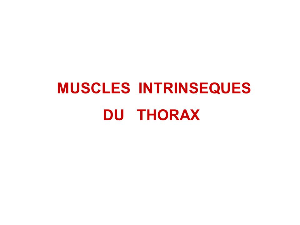 MUSCLES INTRINSEQUES DU THORAX
