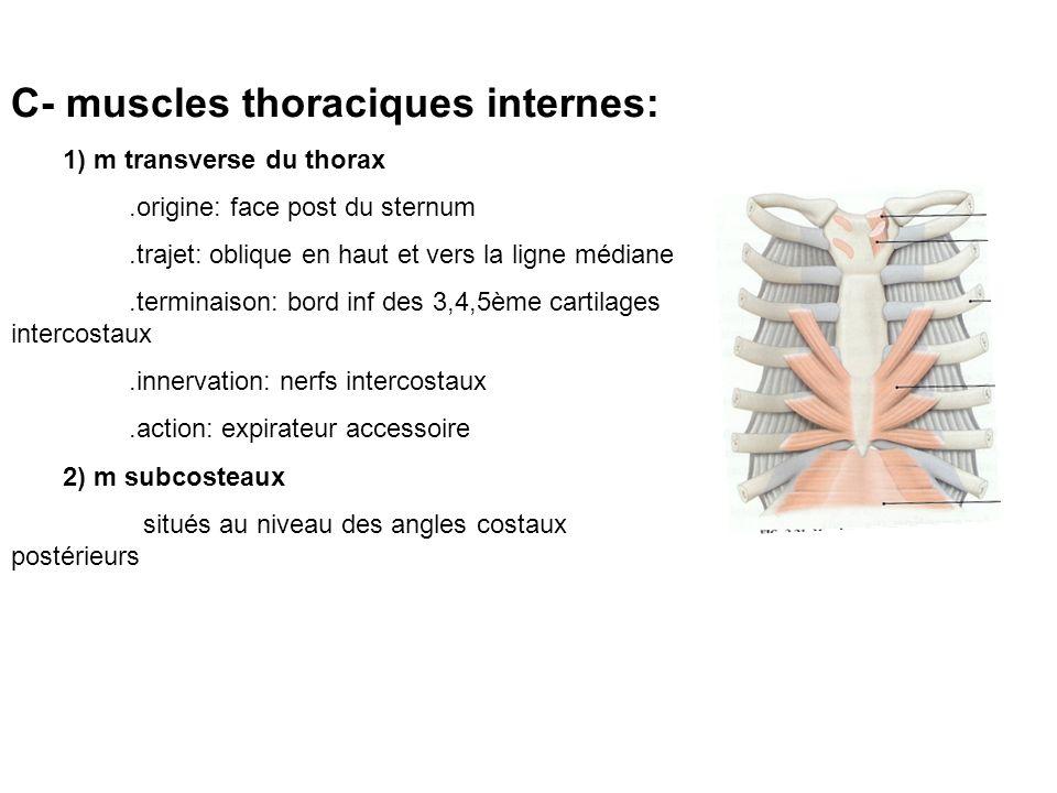 C- muscles thoraciques internes: 1) m transverse du thorax.origine: face post du sternum.trajet: oblique en haut et vers la ligne médiane.terminaison: