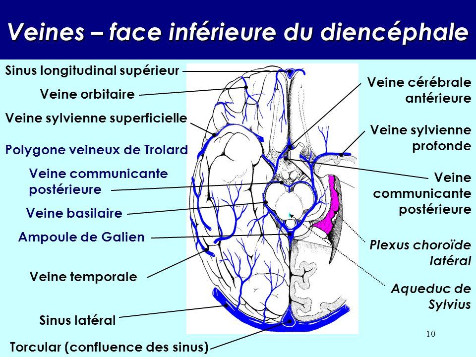 9 Sinus caverneux Artère carotide interne Sinus sphénoïdal Troisième ventricule Grande circonférence de la tente du cervelet Petite circonférence de l
