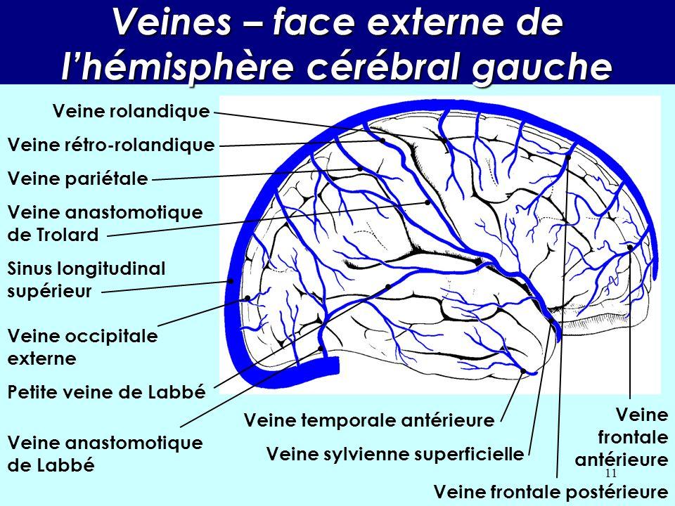 10 Veines – face inférieure du diencéphale Sinus longitudinal supérieur Veine orbitaire Veine sylvienne superficielle Veine temporale Aqueduc de Sylvi