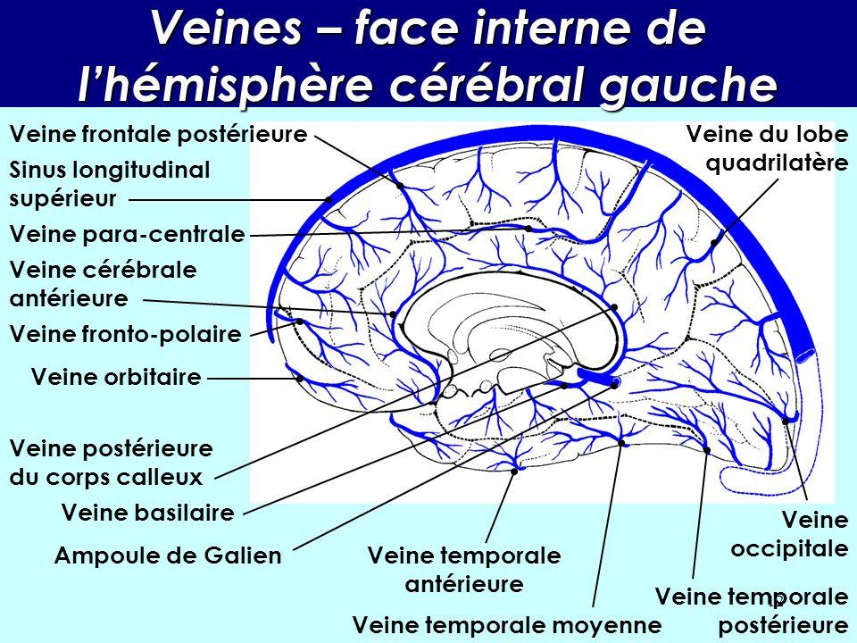 11 Veines – face externe de lhémisphère cérébral gauche Veine frontale antérieure Veine frontale postérieure Veine sylvienne superficielle Veine tempo