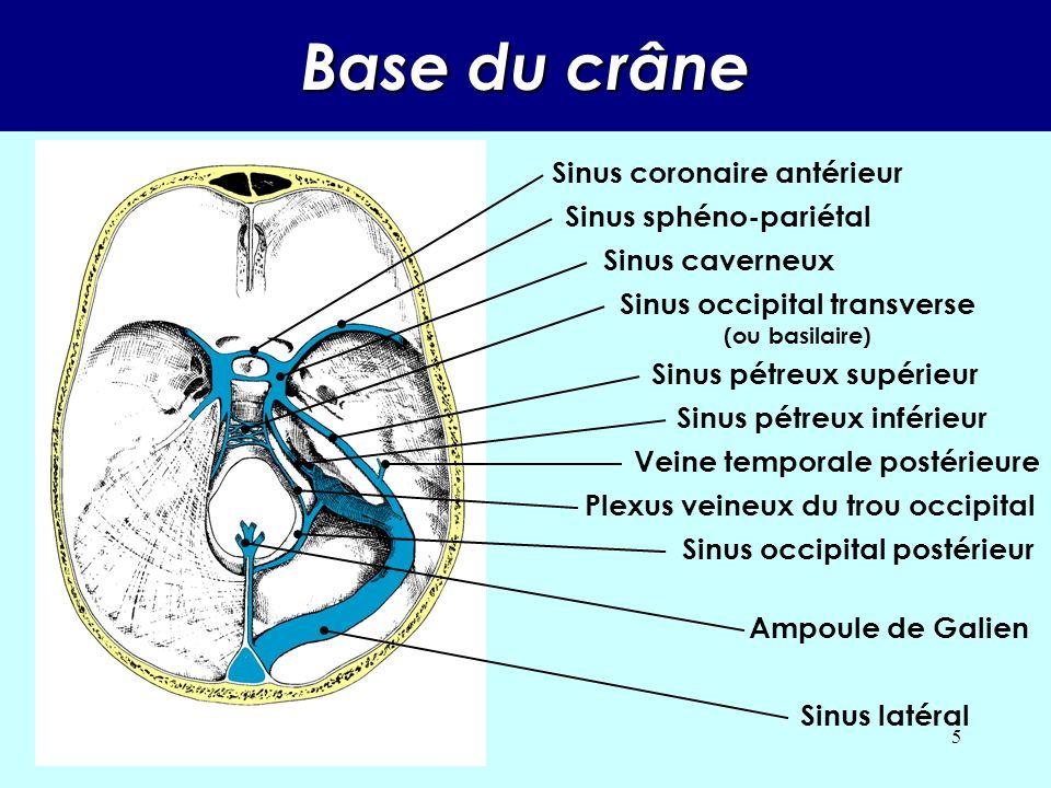 4 ORGANISATION Tout le sang veineux sera dirigé vers des grands troncs : Le sinus longitudinal supérieur rejoint lautre sinus latéral. Le sinus longit
