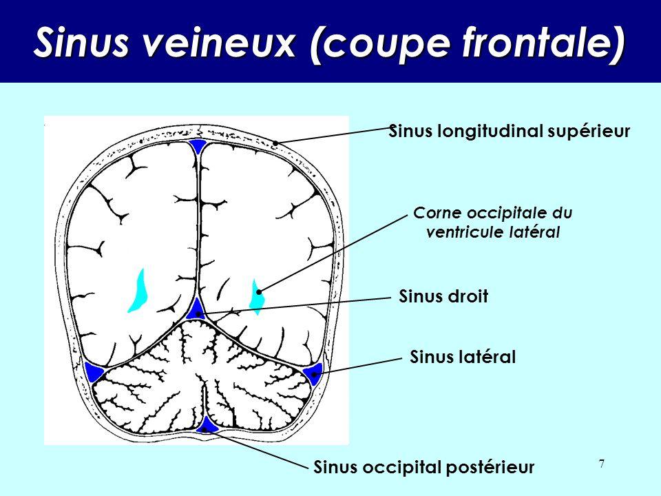 6 Sinus veineux Sinus latéral Sinus pétreux supérieur Sinus longitudinal supérieur Sinus longitudinal inférieur Sinus droit