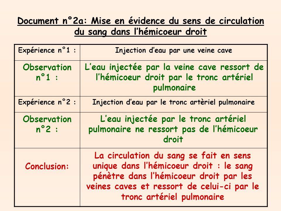 Document n°2a: Mise en évidence du sens de circulation du sang dans lhémicoeur droit Expérience n°1 :Injection deau par une veine cave Observation n°1 : Expérience n°2 :Injection deau par le tronc artèriel pulmonaire Observation n°2 : Conclusion: La circulation du sang se fait en sens unique dans lhémicoeur droit : le sang pénètre dans lhémicoeur droit par les veines caves et ressort de celui-ci par le tronc artériel pulmonaire Leau injectée par la veine cave ressort de lhémicoeur droit par le tronc artériel pulmonaire Leau injectée par le tronc artériel pulmonaire ne ressort pas de lhémicoeur droit