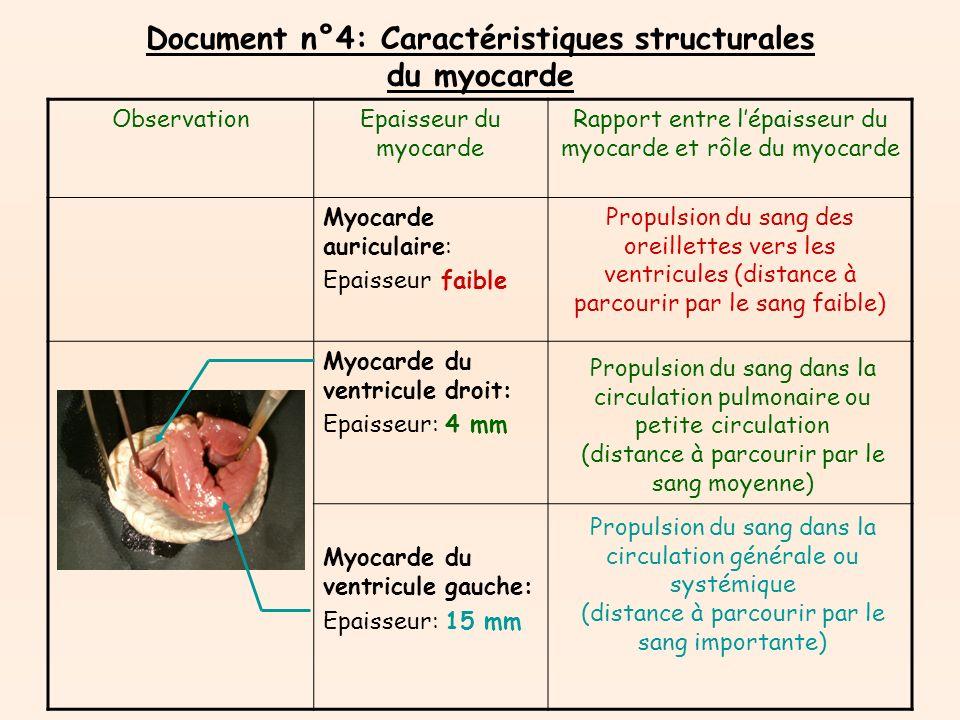 Document n°4: Caractéristiques structurales du myocarde ObservationEpaisseur du myocarde Rapport entre lépaisseur du myocarde et rôle du myocarde Myocarde auriculaire: Epaisseur faible Myocarde du ventricule droit: Epaisseur: 4 mm Myocarde du ventricule gauche: Epaisseur: 15 mm Propulsion du sang des oreillettes vers les ventricules (distance à parcourir par le sang faible) Propulsion du sang dans la circulation pulmonaire ou petite circulation (distance à parcourir par le sang moyenne) Propulsion du sang dans la circulation générale ou systémique (distance à parcourir par le sang importante)