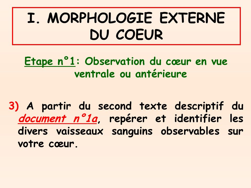 I. MORPHOLOGIE EXTERNE DU COEUR Etape n°1: Observation du cœur en vue ventrale ou antérieure 3) A partir du second texte descriptif du document n°1a,