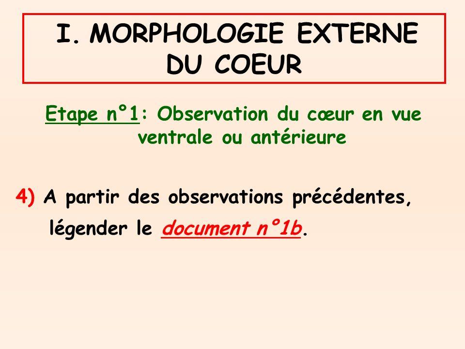 I. MORPHOLOGIE EXTERNE DU COEUR Etape n°1: Observation du cœur en vue ventrale ou antérieure 4) A partir des observations précédentes, légender le doc