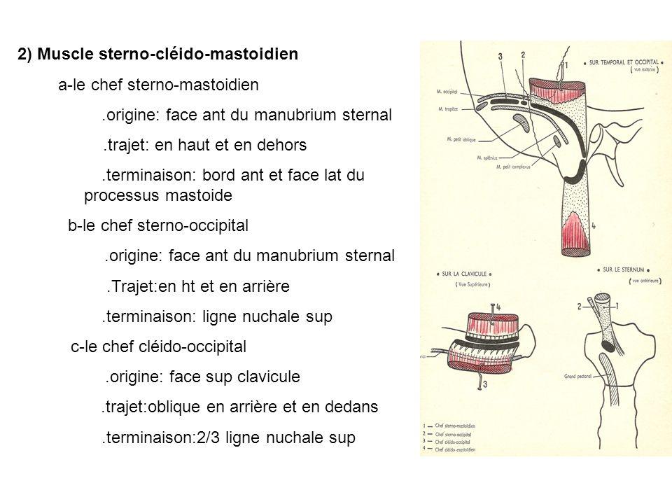 2) Muscle sterno-cléido-mastoidien a-le chef sterno-mastoidien.origine: face ant du manubrium sternal.trajet: en haut et en dehors.terminaison: bord ant et face lat du processus mastoide b-le chef sterno-occipital.origine: face ant du manubrium sternal.Trajet:en ht et en arrière.terminaison: ligne nuchale sup c-le chef cléido-occipital.origine: face sup clavicule.trajet:oblique en arrière et en dedans.terminaison:2/3 ligne nuchale sup